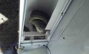 Zmija se zavukla u frižider u Trebinju