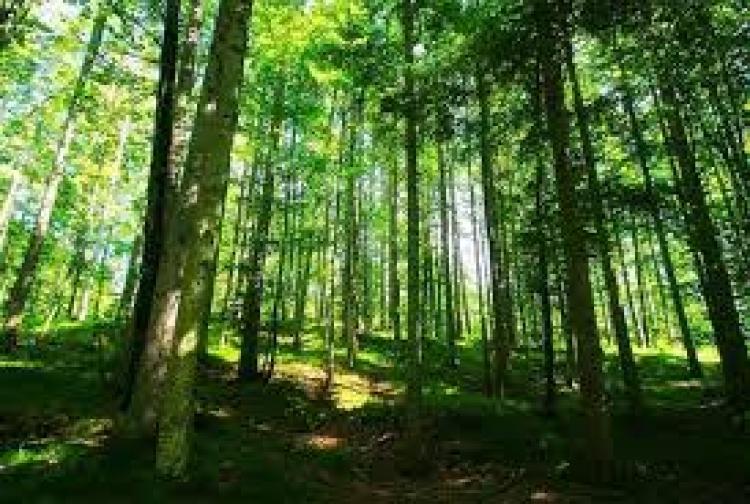 Misteriozna smrt u šumi u Banjaluci