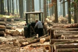 """Sindikat traži povećanje cijene rada u """"Šumama RS"""""""