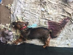 Snimci masovnog trovanja pasa: Ubijali ih stavljajući otrov u hranu