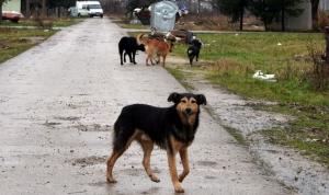 Dječaka napala tri psa, operisan u mostarskoj bolnici