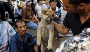 Shenzhen zabranio jedenje pasa i mačaka zbog koronavirusa