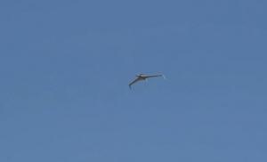 Prvi izvoz dronova u Evropu, Kina jača srpsku vojsku