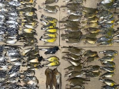 Stotine ptica selica uginulo nakon udara u prozore Svjetskog trgovačkog centra