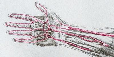 Evolucija u toku: Sve više ljudi u ruci ima dodatnu arteriju