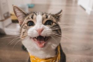 Kineska tvrtka klonirala mačku