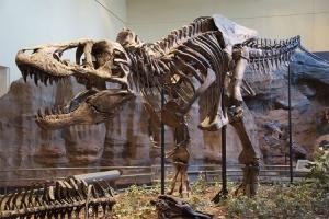 Kolekcionar prodaje fosilne kosti tiranosaurusa
