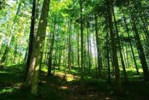 Evo čiji je skelet u BL šumi: Kosti starije žene pronađene u šumi nakon 6 godina
