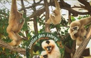 Bečki hor majmuna proglašen za životinje godine (video)