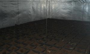 Banjalučanin krao struju kako bi proizvodio marihuanu, pronađeno 500 saksija