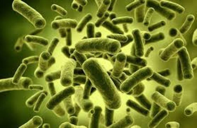 Probiotici mogu uzrokovati nadutost, dezorjentaciju i druge neprijatne simptome