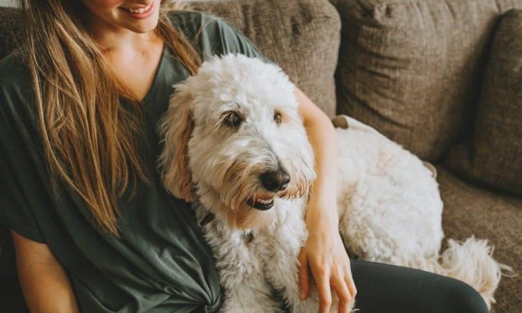 Da li je pas iz filma umro? Pogledajte sajt na kome možete da saznate da li pas umire u filmu