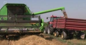 Red je da poskupi hljeb: Prinos pšenice umanjen za 30 posto