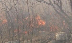 Požar kod Trebinja se širi: Vjetar otežava gašenje vatre