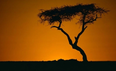 Tužna priča najusamljenijeg drveta na svijetu - Simbol regije kojemu je presudio čovjek