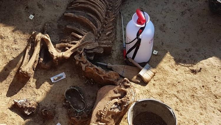 FOTO: Senzacionalno! Kod Vinkovaca pronašli rimska kola na dva kotača s konjima!