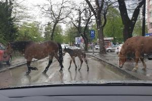 Konji šetaju centrom Banjaluke