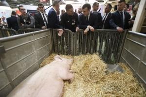 (foto) Političari među svinjama, kravama, u polju