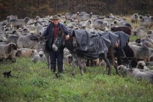 Željko Marić farba ovce da budu ljepše